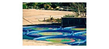 Anillos solares calientan el agua de la piscina