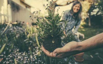 Claves para crear el jardín perfecto