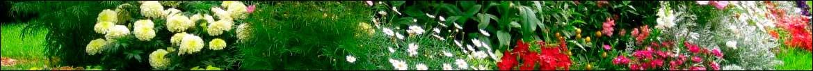Imagen de la categoría de Jardín